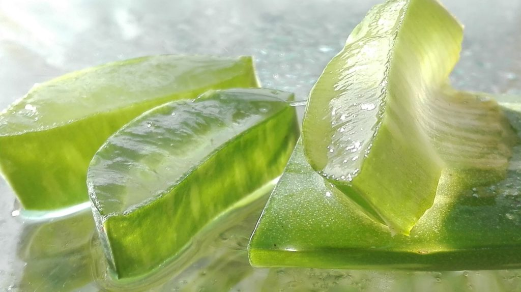 aloe vera natural remedy ringworm