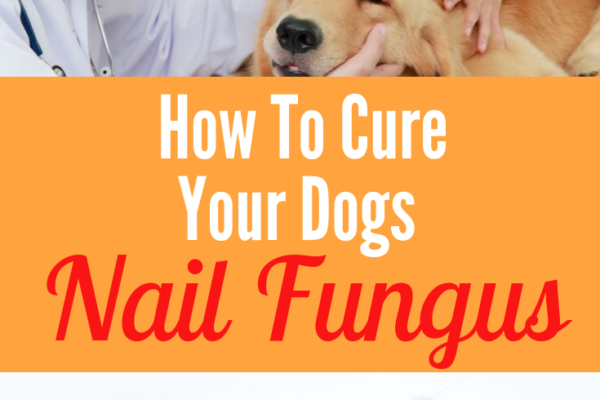 can dogs get nail fungus