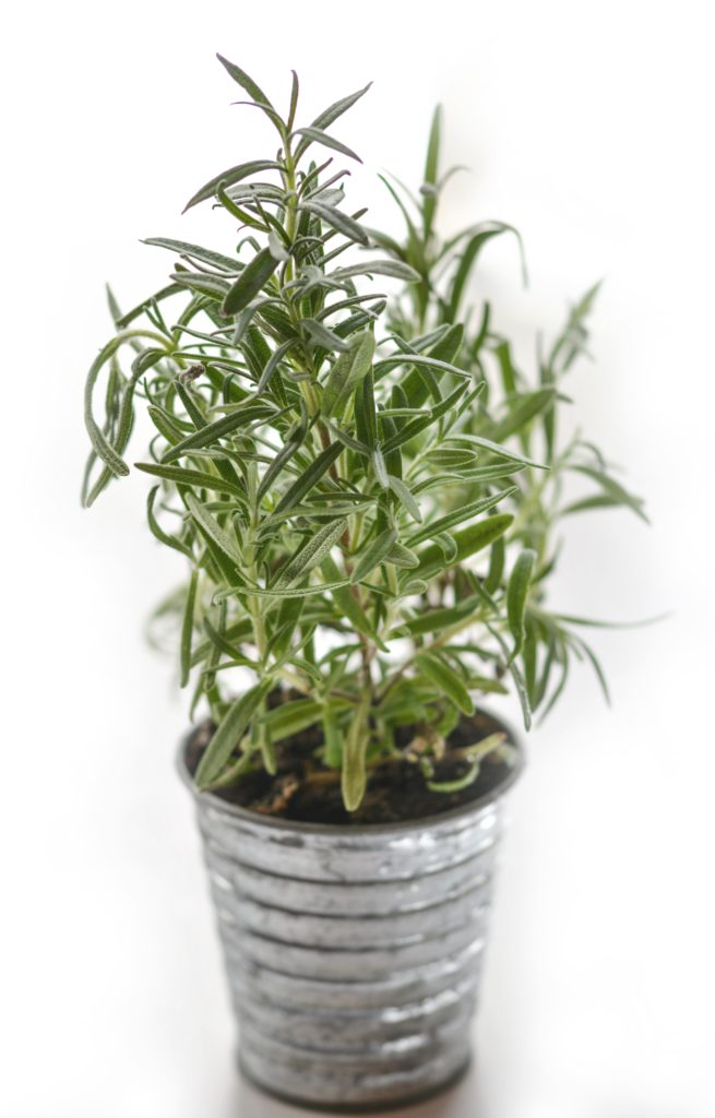 rosemary foot soak to kill odor